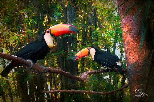 Image of the Toucans greeting visitors at the St. Augustine Alligator Farm