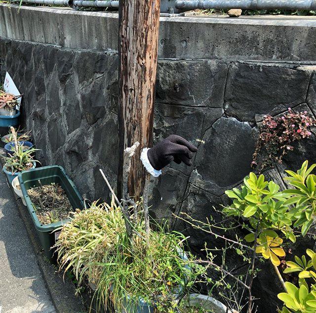 #片手袋 と #路上園芸 。仲木戸駅近く。