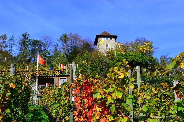 Rebberg und Schlössli in Niederurnen