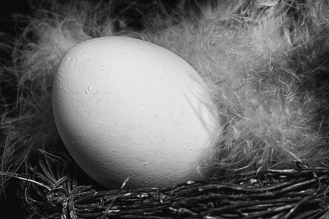Egg like owl fan