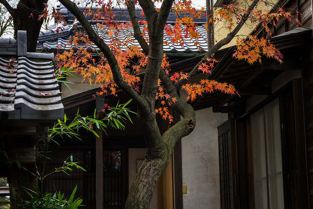 #356 Leaves and roofs