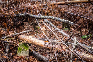 Tall Pines Preserve and South Saluda Church Cemetery-39   by RandomConnections