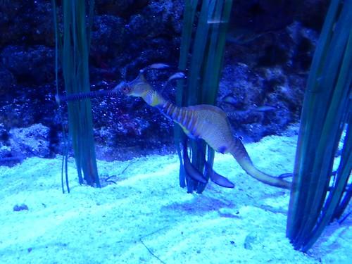 Dubai Mall - Aquarium - 5