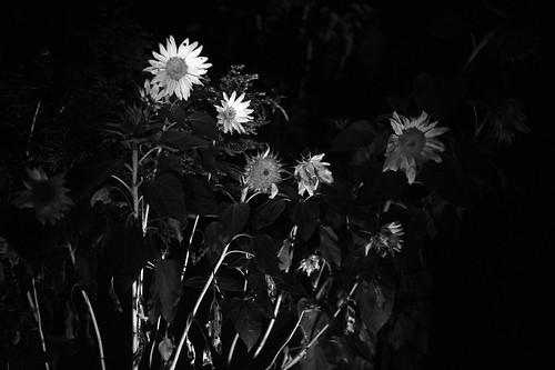 Fotografía nocturna   by jafsc