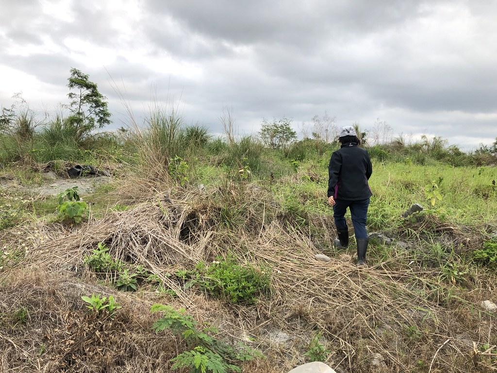 已有植被的土地,也需考慮整體效果,在缺口補植適合的樹種。攝影:廖靜蕙