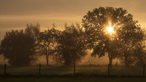 Sunrise through trees | by NerG Photography