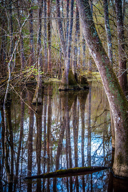 Swamp Lines