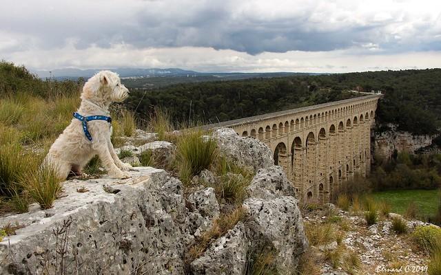 Joey et l'Aqueduc de Roquefavour