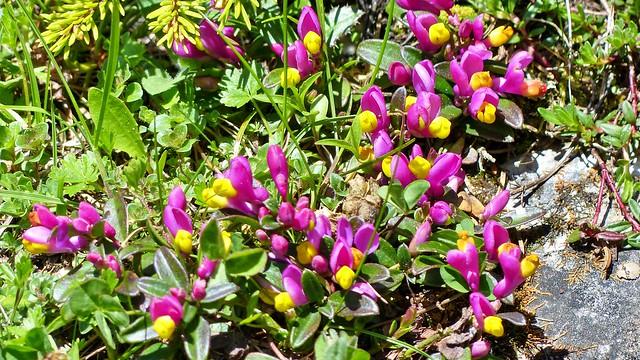 Blumen im Langental