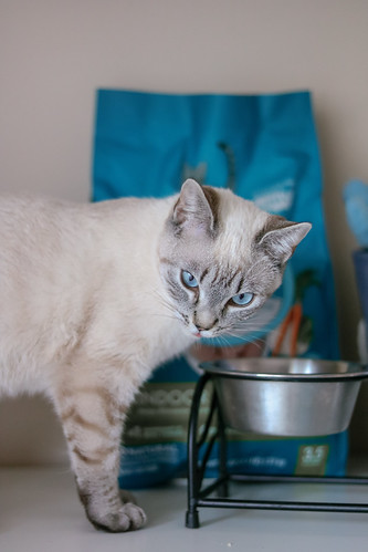 Reasons for Cat to Take the Purina One 28 Day Challenge #PurinaONEVisibleDifferences | by BetzysMakeup