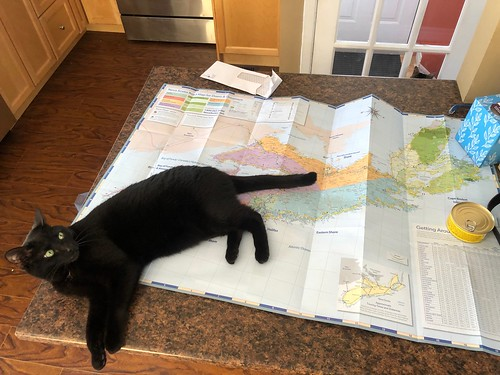 Martha #cat with Nova Scotia map | by brownpau