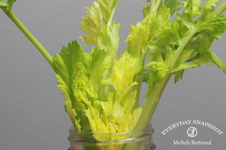Celery Start.1