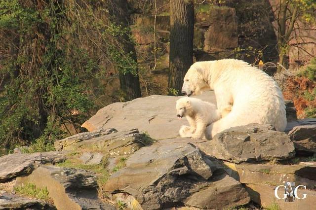 Besuch Tierpark Friedrichsfelde 06.04.201941