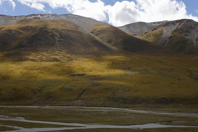 Landscape with Yak, Tibet 2018