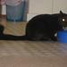 More Pet Photos