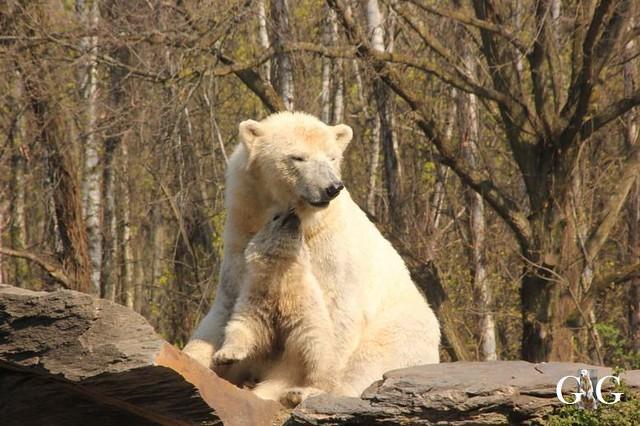 Besuch Tierpark Friedrichsfelde 06.04.201960