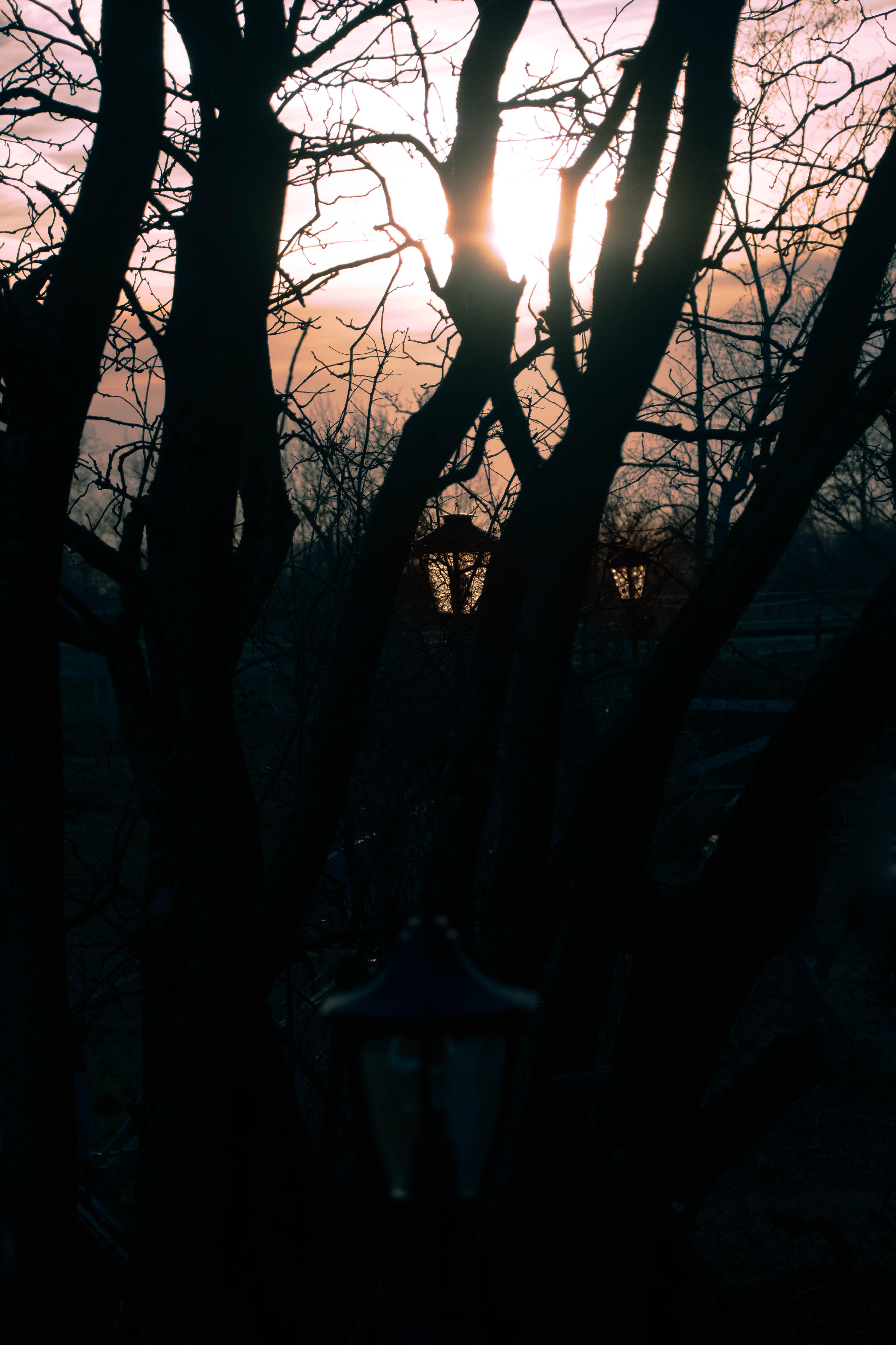 Winter Sunlight_.jpg
