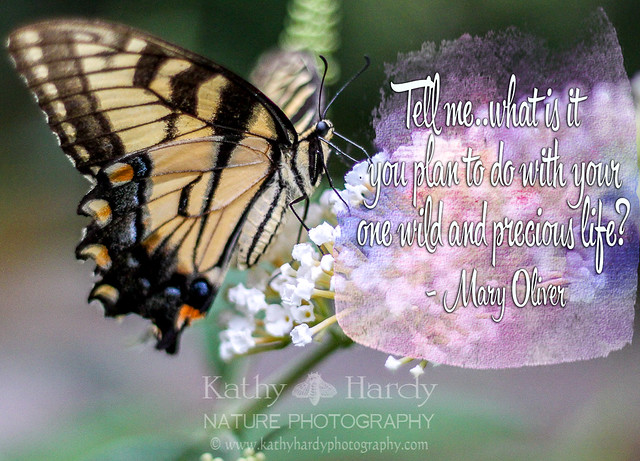 Rest in Peace Mary Oliver!