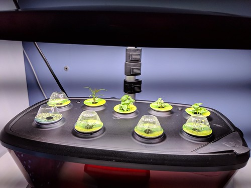 AeroGarden | by Ruth and Dave