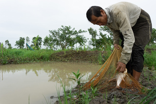Aung Kyaw lands fish from his pond.