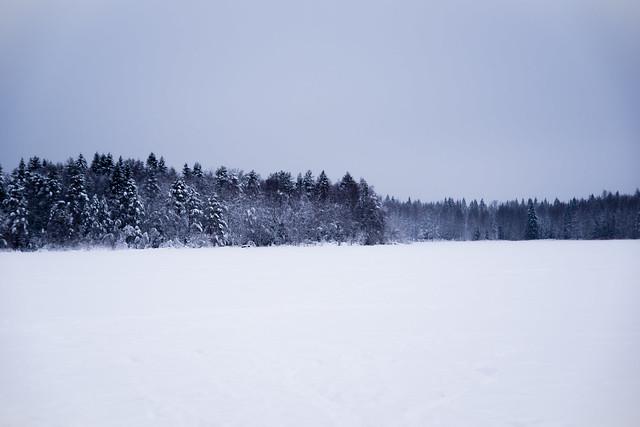 Snowy forest scene.