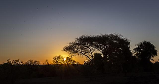 Letaba sunset