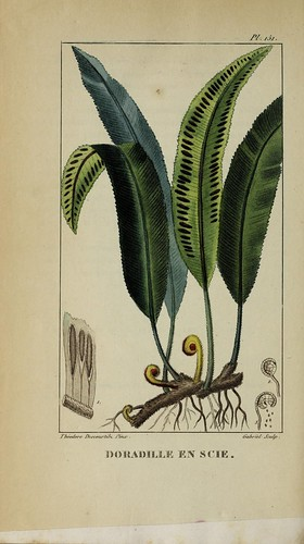 n513_w1150 | by BioDivLibrary