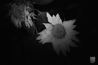 Fotografía nocturna | by jafsc