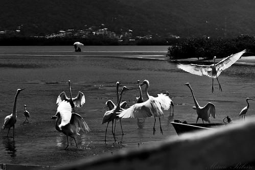 IMG_9244 | by Márcio Ribeiro