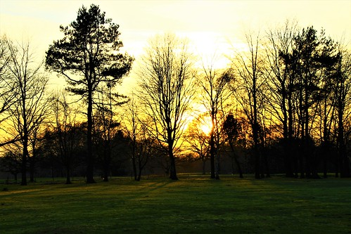 europe england cheshire outdoor nature trees simplysuperb sunlight sunset silhouettes greatphotographers