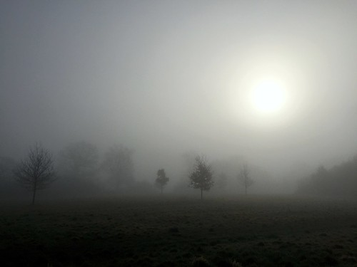 foggy sunrise field morning trees park sun atmosphere mist landscape grass johndalkin heavensgatejohn silhouette 10faves 25faves 50faves