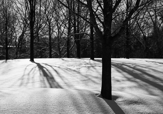 Shadows & Moods