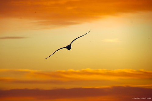italy naples napoli bird seagull sunset passionphotography travelphotography travel
