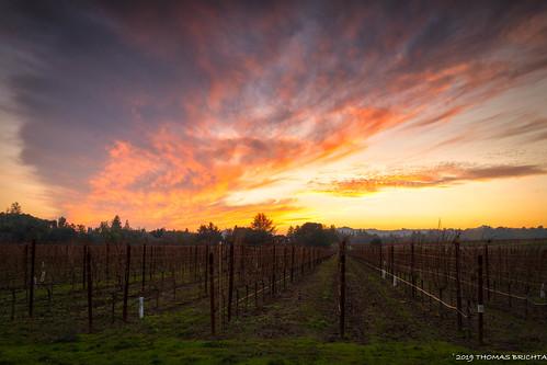 tombrichta tombrichtaphotography tombrichtaworkshops sunset vineyard winecountry napavally napa wine landscape travel travelphotography