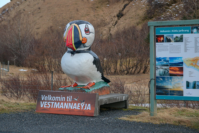 Enormous Puffin, Route 1 to Reykjavik, Iceland