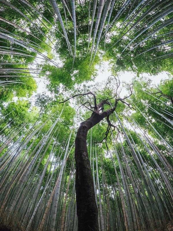 嵐山|京都