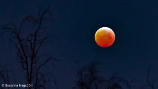 Blood moon | by Blackpeppereye