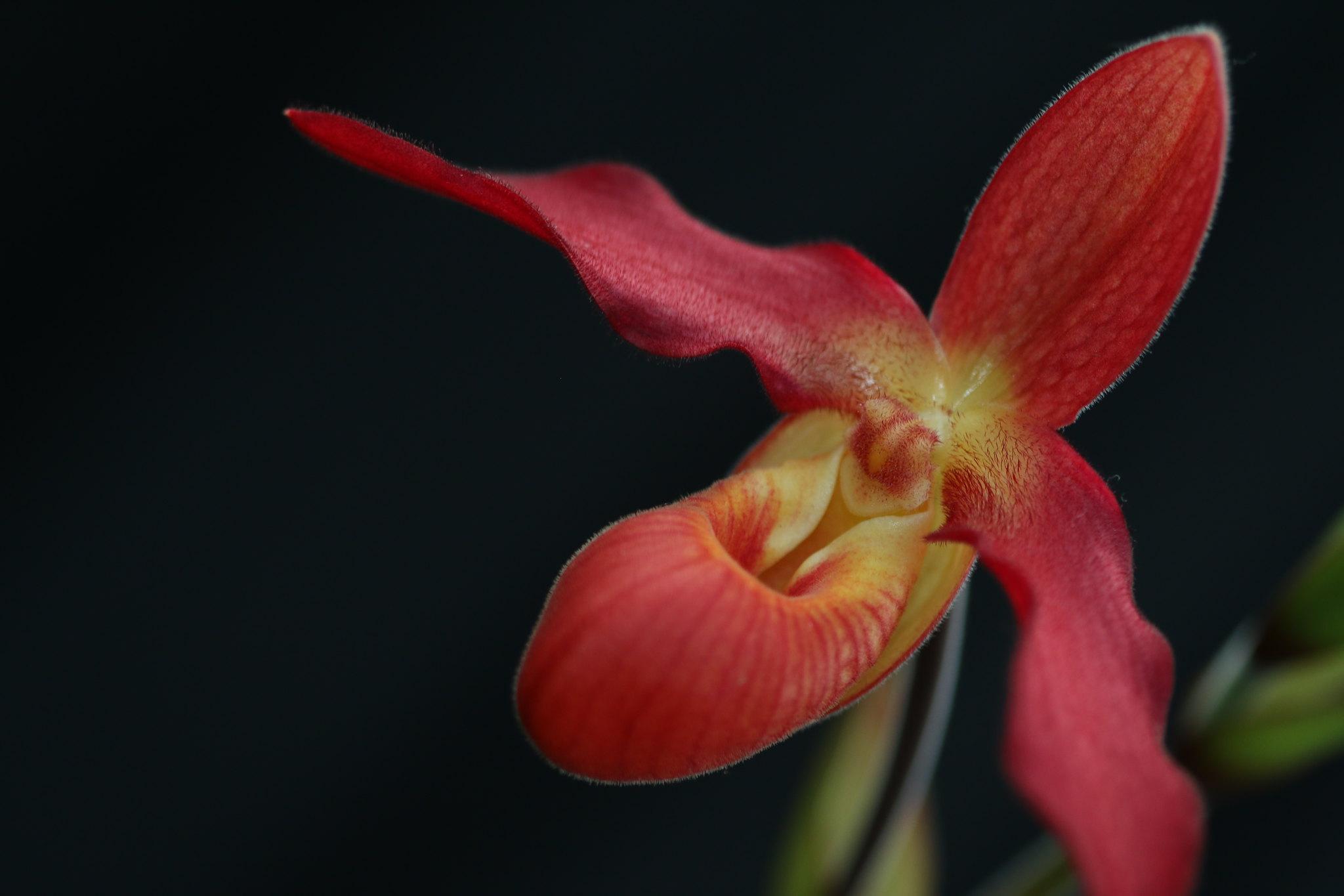 Red Slipper, Of Sorts (SOTC 319/365)