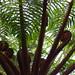 Tree-size fern.  Jungle. Ecuador by cbrozek21