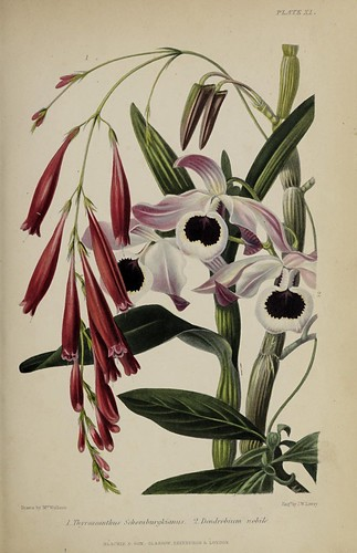 n828_w1150   by BioDivLibrary