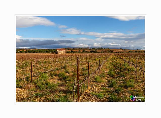 « Greffez des plants de rosiers sur des plants de vigne, ça fera du vin rosé naturel. »  De  Pierre DAC.