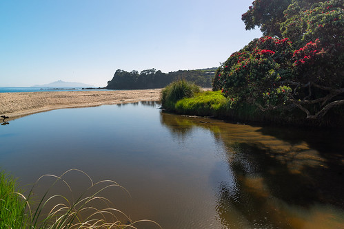 beach langsbeach nz newzealand northland pohutukawa streambehindlangsbeach tarangaisland tree sand smallestuary summer