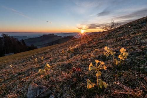 Spring Sunrise