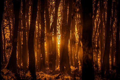 tree sunset forest canon 70200mm nature naturephotography naturescape