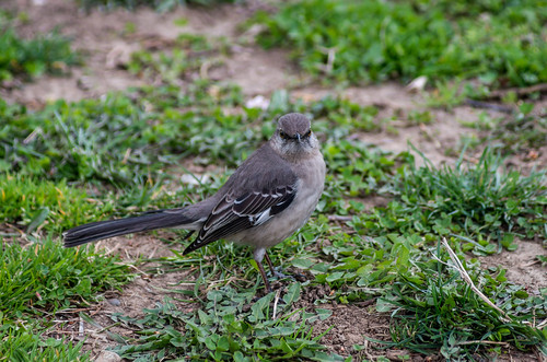 Bird in the Bronx   Ave en el Bronx   by Edgar.Omar