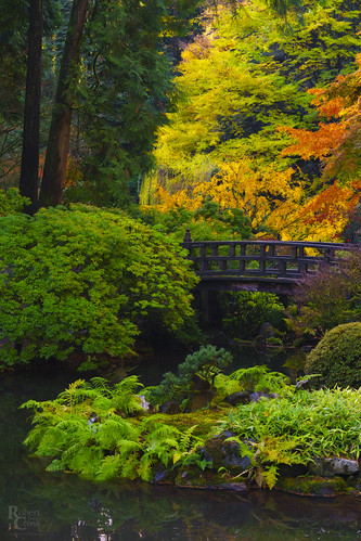 a7rii alpha emount fe85mmf18 ilce7rm2 multnomah or oregon pdx pacificnorthwest portland portlandjapanesegarden sony washingtonpark autumn bridge fall foliage fullframe garden landscape leaves mirrorless park pond portrait trees water