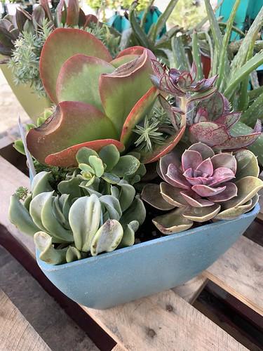 Succulent arrangement | by ptrcktlln