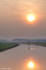 eenzame zwaan in waterige zonsondergang