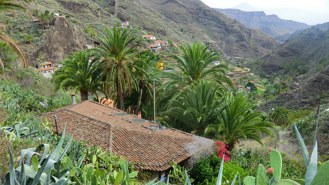 La Gomera (Spain's Canary Islands) -  palm grove @ La Laja