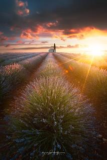 Valensole at Sunrise